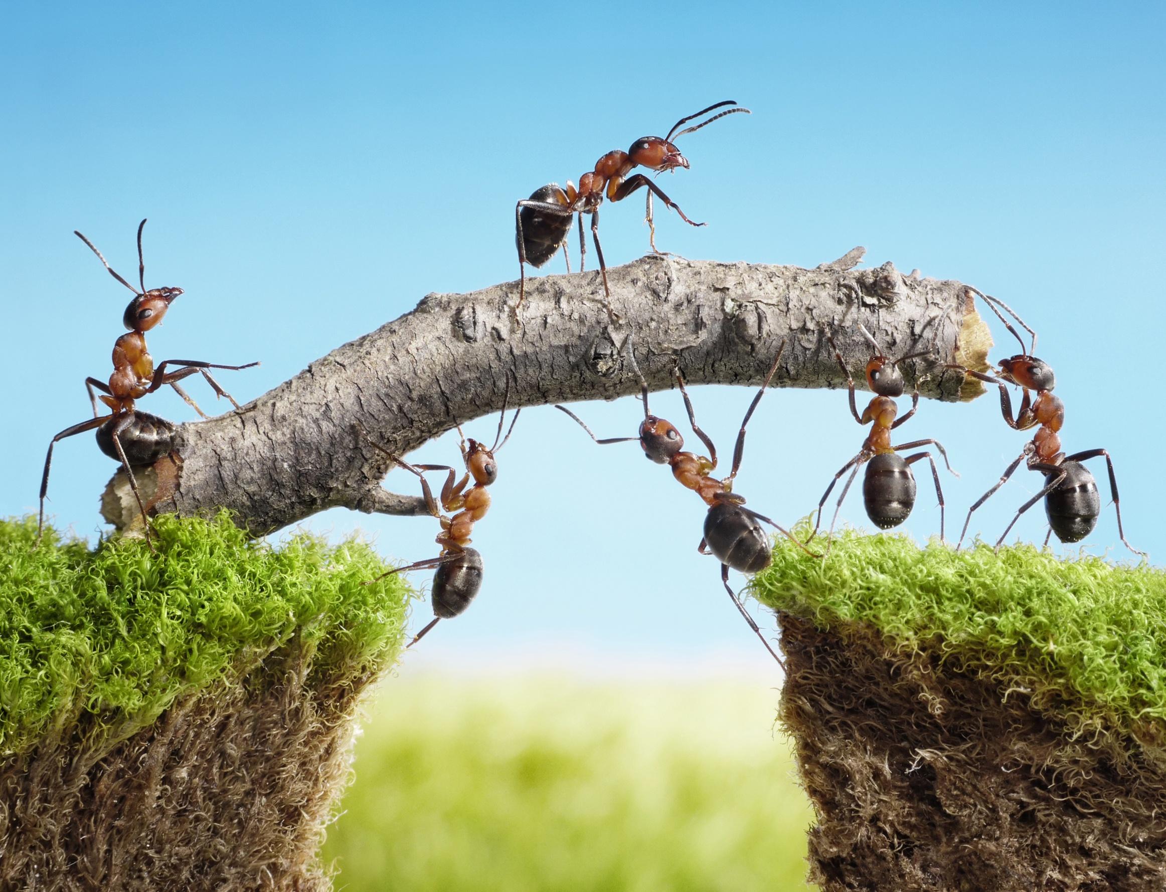 团队合作 – 团队成员的素质